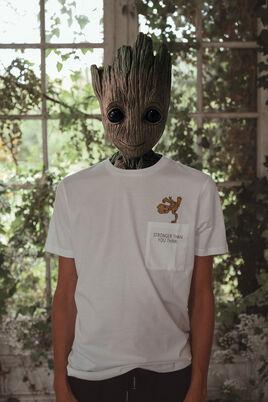 T-shirt licence BEBE GROOT